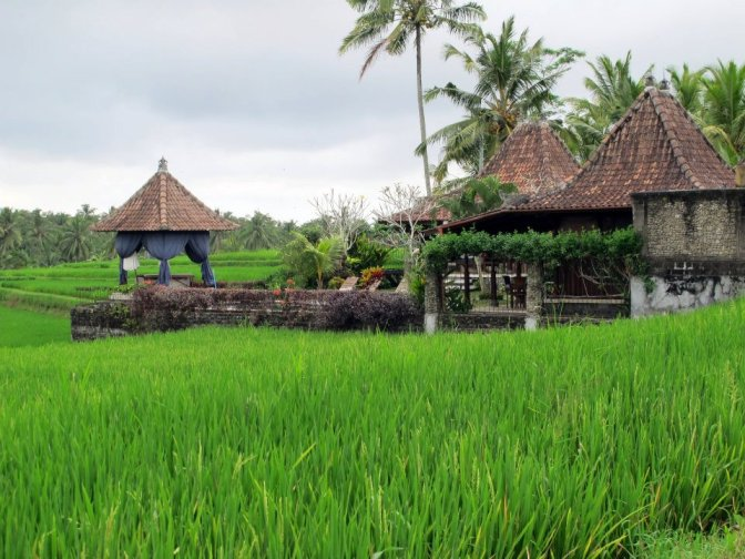 From Bali with love