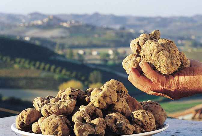 The Truffle party, Italy