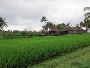 The Rumah Capung